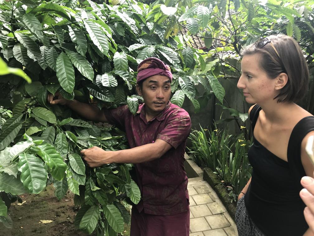 Bali Luwak mosómedve