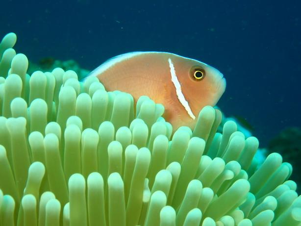 Bali Nemo hal